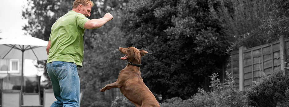 brown dog playing with owner
